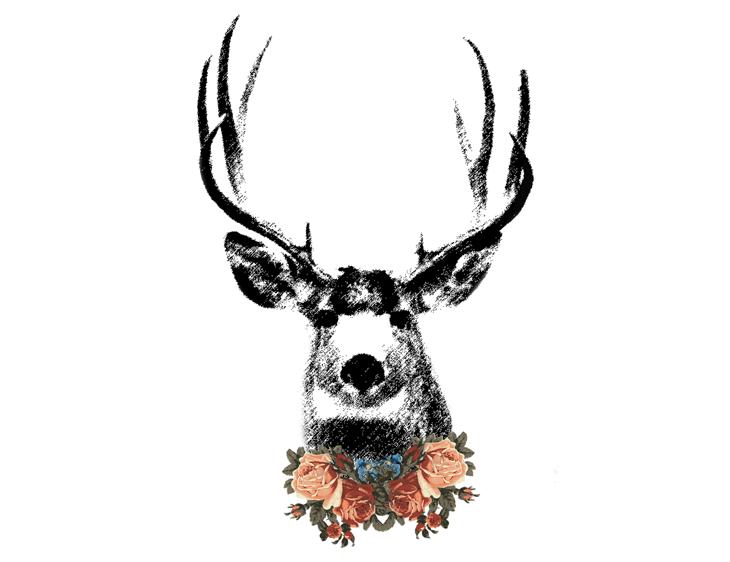 deer head diagram  deer  free engine image for user manual