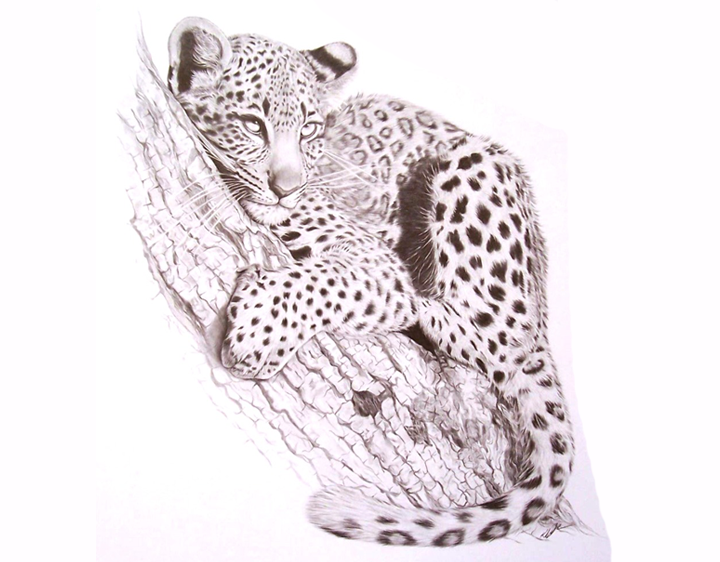 Leopard Love by Katharine